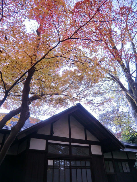 11月29日(2013) 浴恩館公園:小金井市