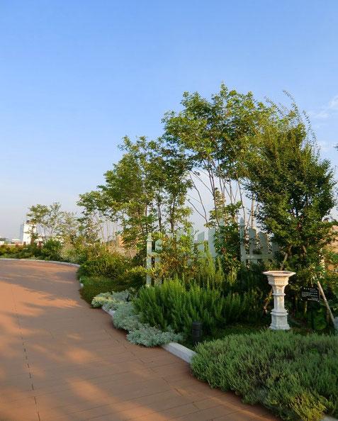 8月31日(2013) 屋上庭園(恋ヶ窪ガーデン:国分寺ファーマーズマーケット屋上の気持ちのよい場所)