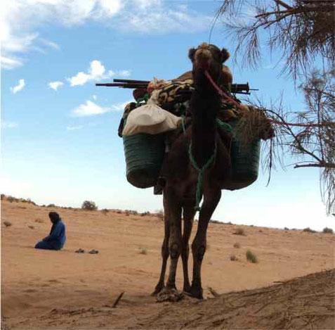 Viaggi nel deserto - Escursioni deserto Marocco - Tour - Harmony Desert
