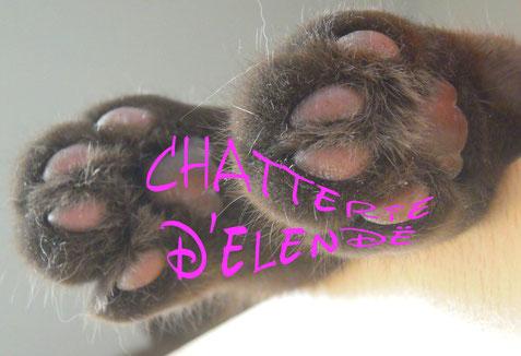 Notre site Chat de France