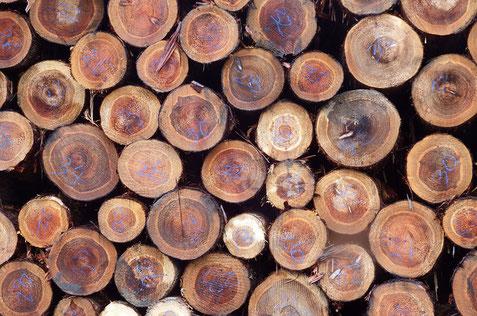 木質ペレットの原材料の間伐材