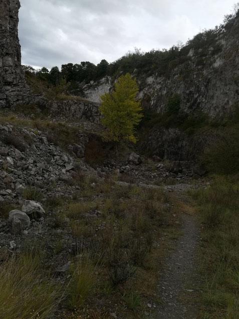 Der Steinbruch von Niederrotweil