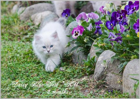 Piante velenose per il gatto siberiano benvenuti su for Piante velenose per i gatti