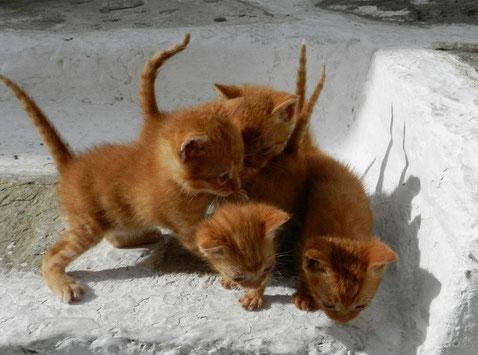 Katzenbaby Adoption Paros