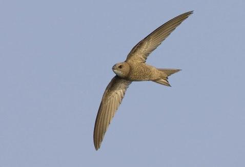 http://www.birdforum.net