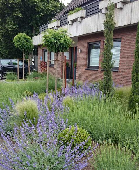 Gräser, Lavendel, schlanke Zypressen, runde Baumkronen