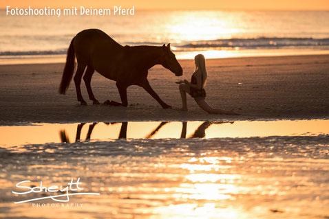 Infos rund um ihr Pferdeshooting