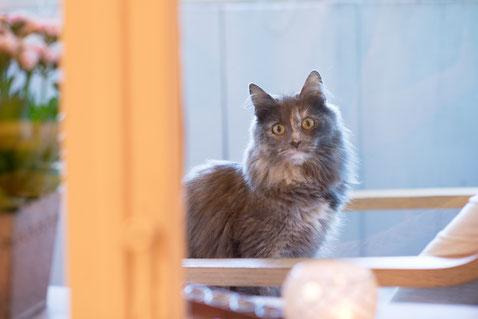 scheu und neugierig schaut sie in seltenen Augenblicken zum Praxisfenster herein - Lucy, die Katze vom Nachbarhaus in der schönen Berner Altstadt