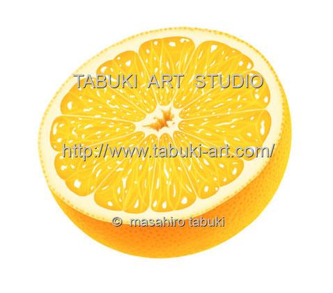 グレープフルーツ grapefruit 果物 くだもの みずみずしい シズルイラスト レンタル ストック素材