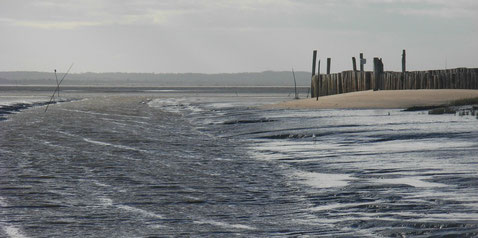 Entre vase, eau et sable(s) à Audenge (33)   @ Fred G