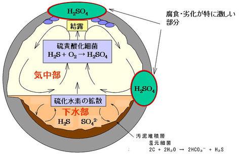 図1 下水道コンクリート劣化の模式図