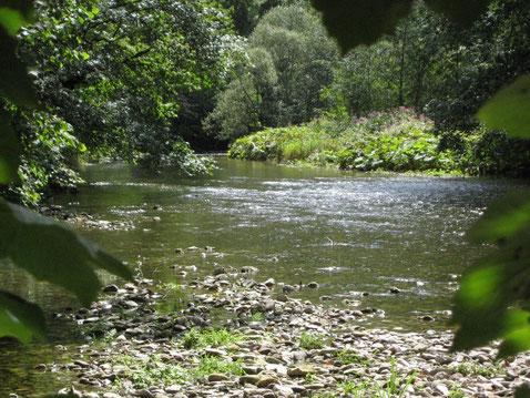 4 > Belastung des Lebensraumes Wald