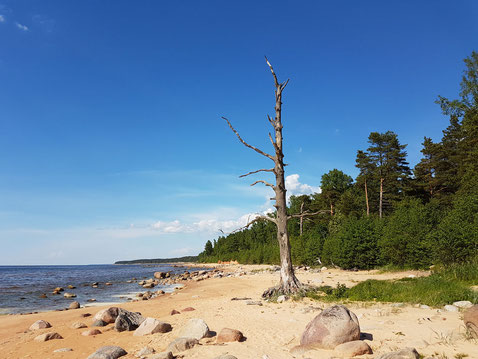 Visit Latvia, hiking along Baltic sea, sandy beaches and pristine nature, deserted, clean