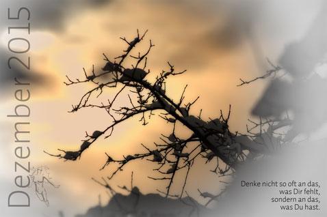 Schneeapfelbaum