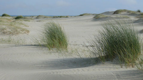 Marée, Baie d'Authie, sortie, guide, oiseaux, dunes, plantes, prés salés, Fort-Mahon plage, Côte Picarde