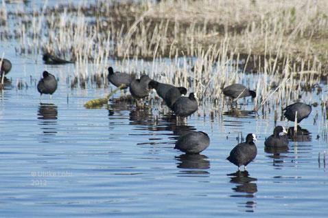 Wasservögel...