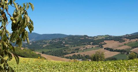Landschaft bei Camerino