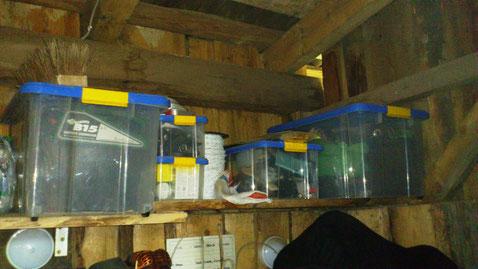 Ordnung muß sein: Stapelboxen