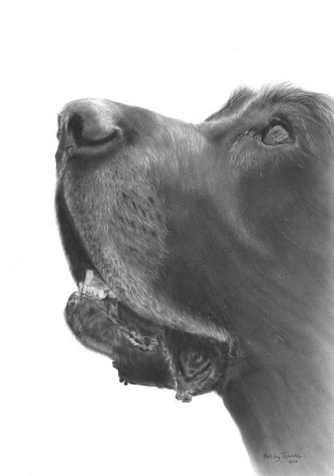 Unieke levensechte tekening hond - PanPastel - Art by Talitha