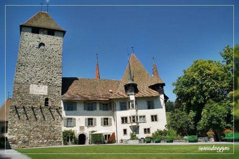 Beim Schloss Spiez hatte es...