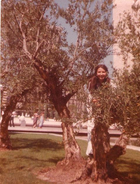 Un olivo en la plaza. F. Pedro.