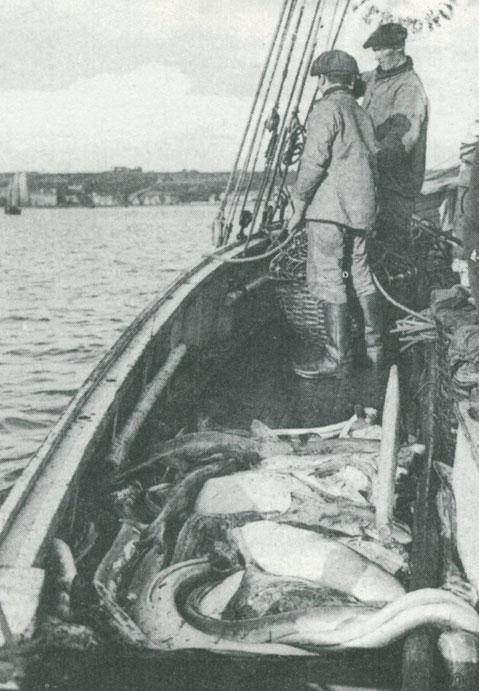 Pêche au congre à Perros-Guirec certainement à bord d'un sloup Roscovite