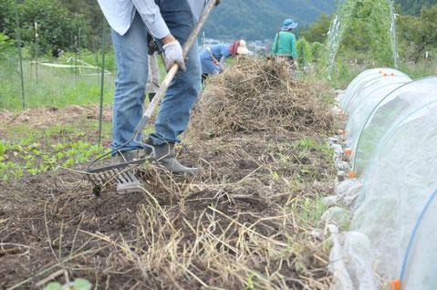 ビーツ 自然栽培 農業体験 野菜作り教室 体験農場