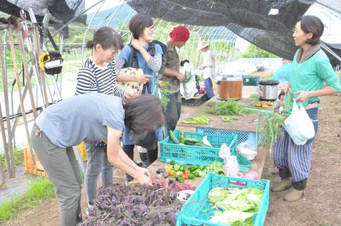 野菜作り教室 農業体験 体験農場 自然栽培 オーガニック野菜づくり