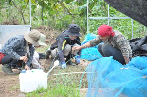 タマネギ 自然栽培 野菜作り教室