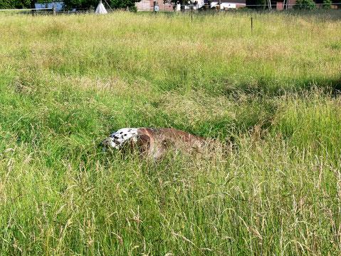 Der Punkt ist umgefallen: und im hohen Gras kaum zu sehen. ;-)