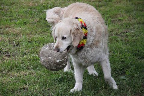 Warum muß ich immer den Ball holen?