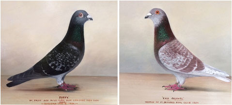 J Browne, A pair of prize winning racing pigeons by J Browne