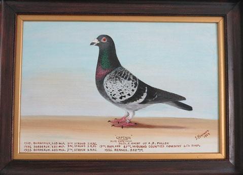J Browne, Portrait of 'Captain', prize winning racing pigeon