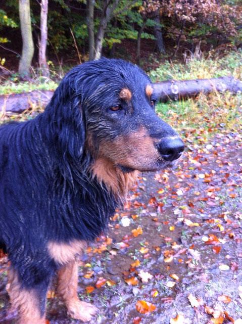 Der Herbst ist da. Gut für Bakis Fellpflege :)