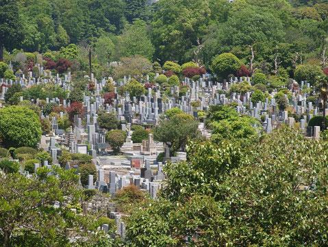 ●浅間山から多磨霊園を見下ろしたもの。森の中にお墓があるように見えます。