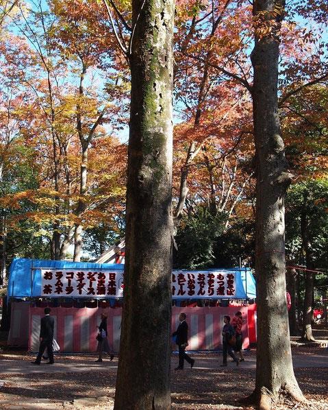 11月13日(2014) 大國魂神社(七五三参り)