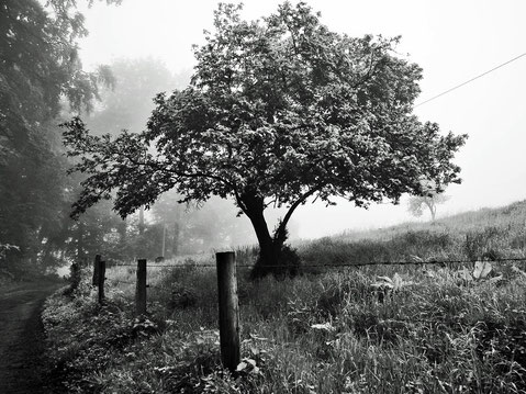 Nebel Baum