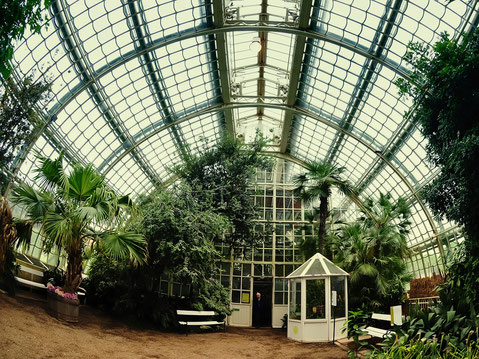 das Palmenhaus Innen