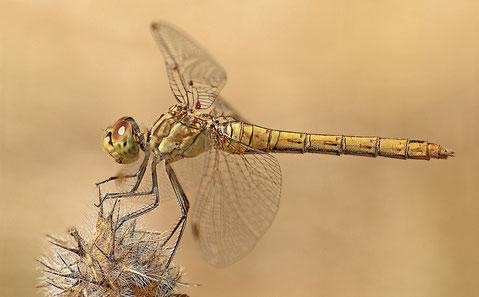 Photo d'une libellule délicatement posée sur une plante