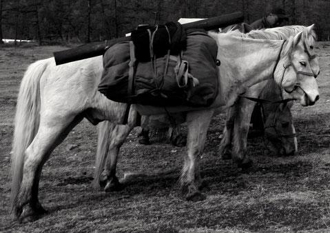 Les sacoches de portage d'un cheval de bât en Mongolie.