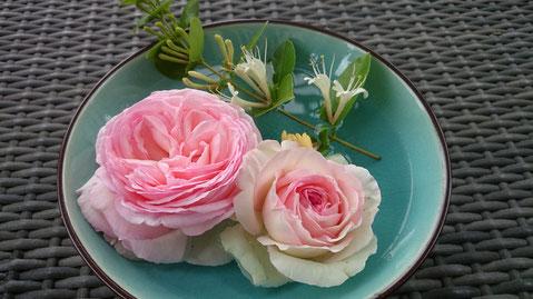 Roses Pierre de Ronsard et chèvrefeuille. Crédit photo A.Molina