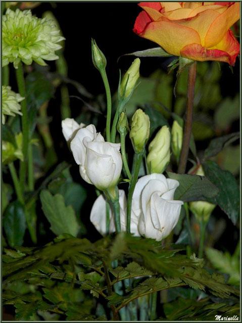 Lisanthus blancs, Roses et Gerberas