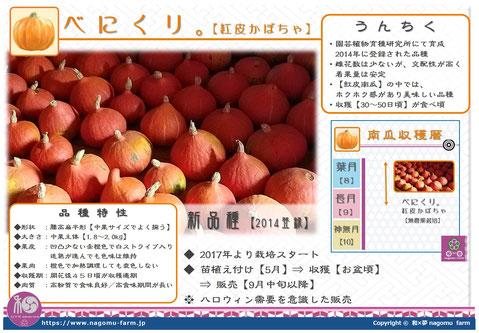 べにくり 【紅皮かぼちゃ】 紹介pop 和×夢 nagomu farm