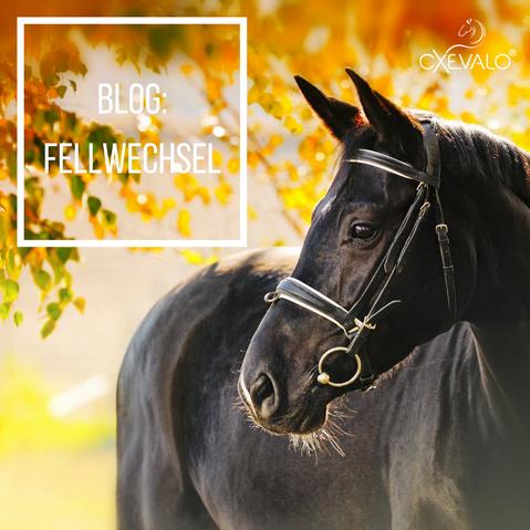 Schwarzes Pferd vor herbstlich verfärbtem Baum