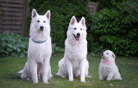 3 Generationen-Bild: Oma Shania in der mitte, links Papa Ben und rechts Enkelchen Daisy