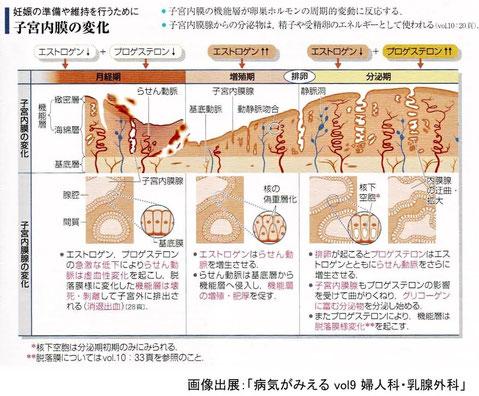 子宮内膜の変化:妊娠の準備や維持を行うために