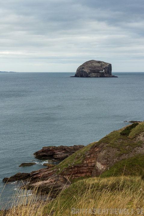 Bass,rock,firth,of,forth,Insel,Basstölpel,Schottland,Tipps