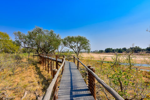 Treetop Walk im Mapungubwe NP