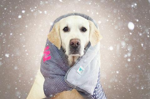 Weihnachtsgeschenk Hund, Geschenk Hundebesitzer, Winter, Hund, Hundedecke