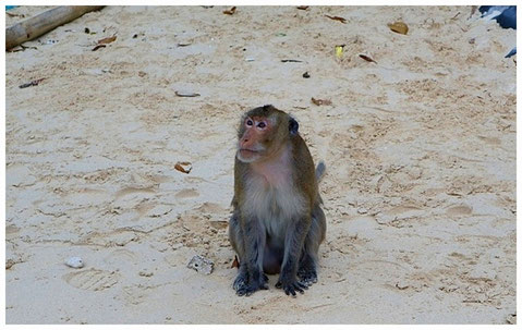 Halong Bay Monkey Island halongbucht vietnam sehenswürdigkeiten bootstour